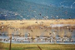 vrana-lake(1)